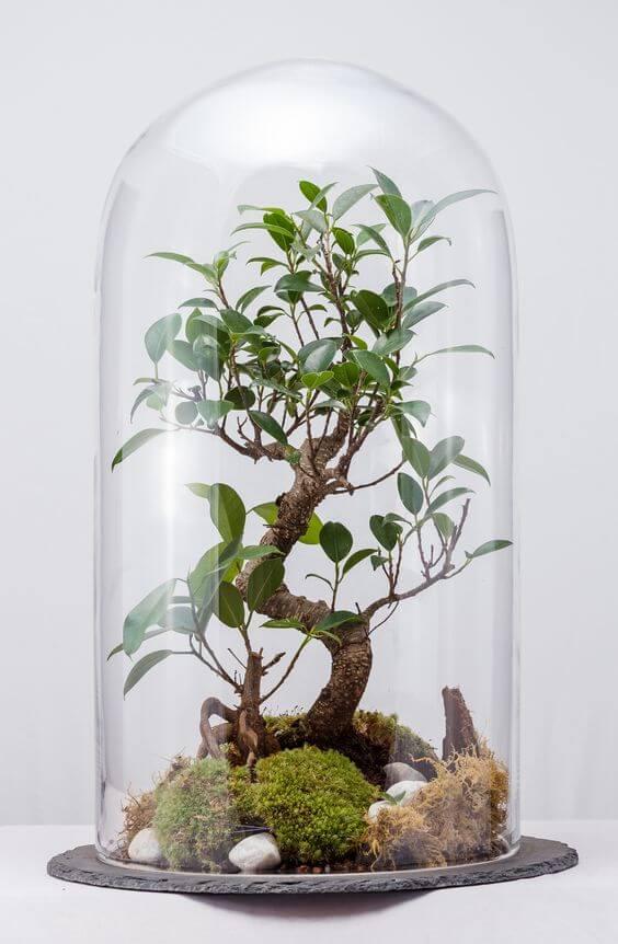 Террариум, флорариум