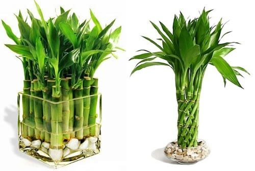 10 лучших растений для ванной комнаты